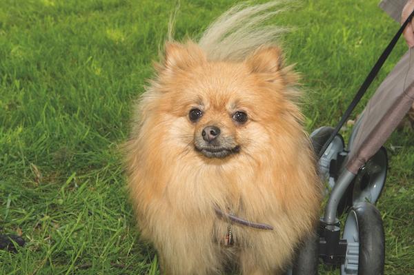 Sydenham Fayre Dog Show